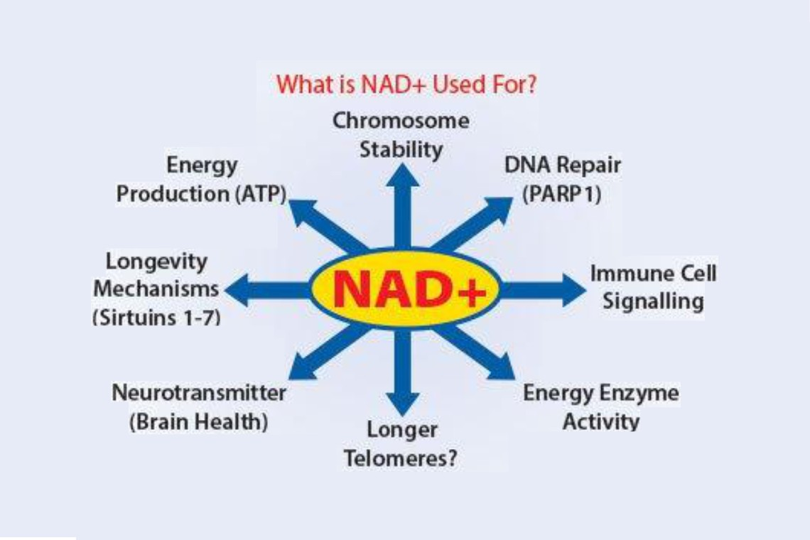 NAD The Secret of Life and Anti-Aging