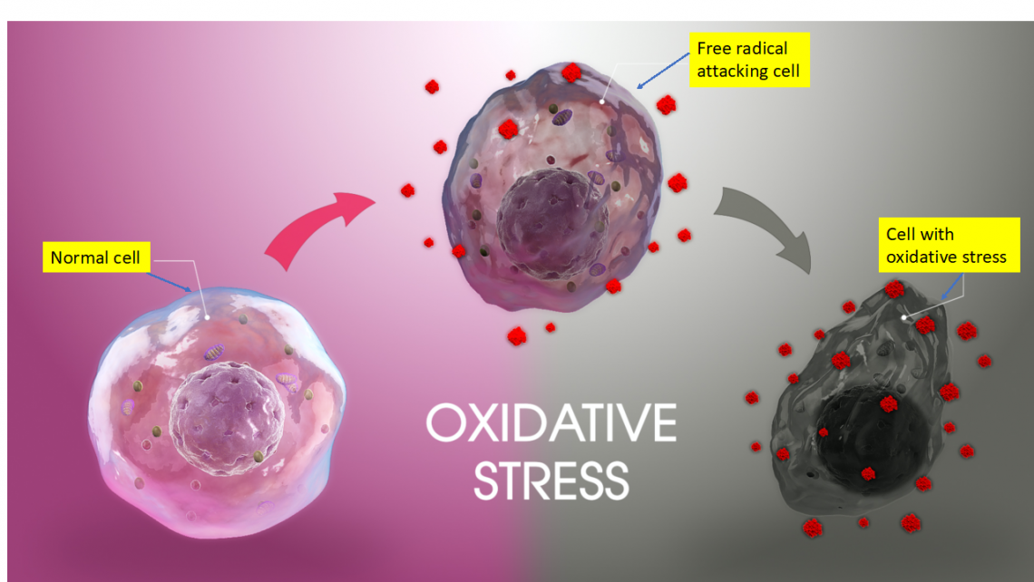 OXIDATIVE STRESS: A SILENT ENEMY WITH MANY TENTACALS