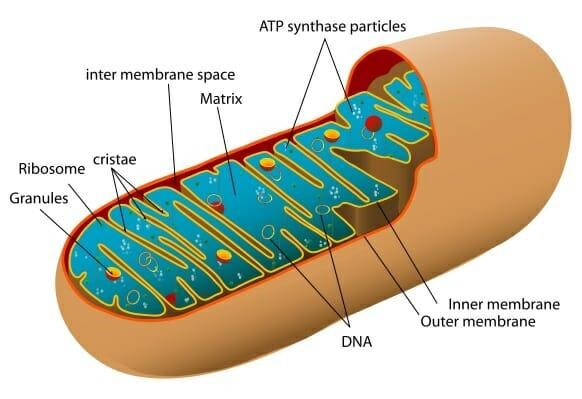 Pensum Regenerative Medicine