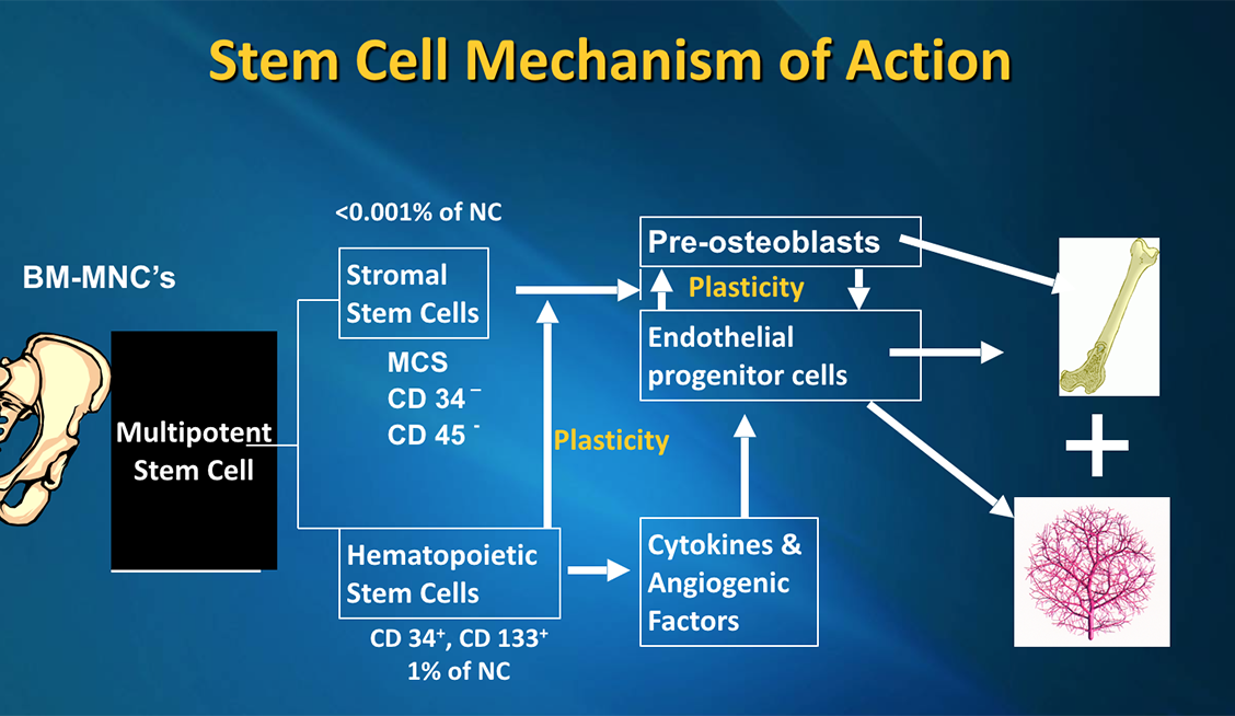 Stem Cell Mechanism of Action