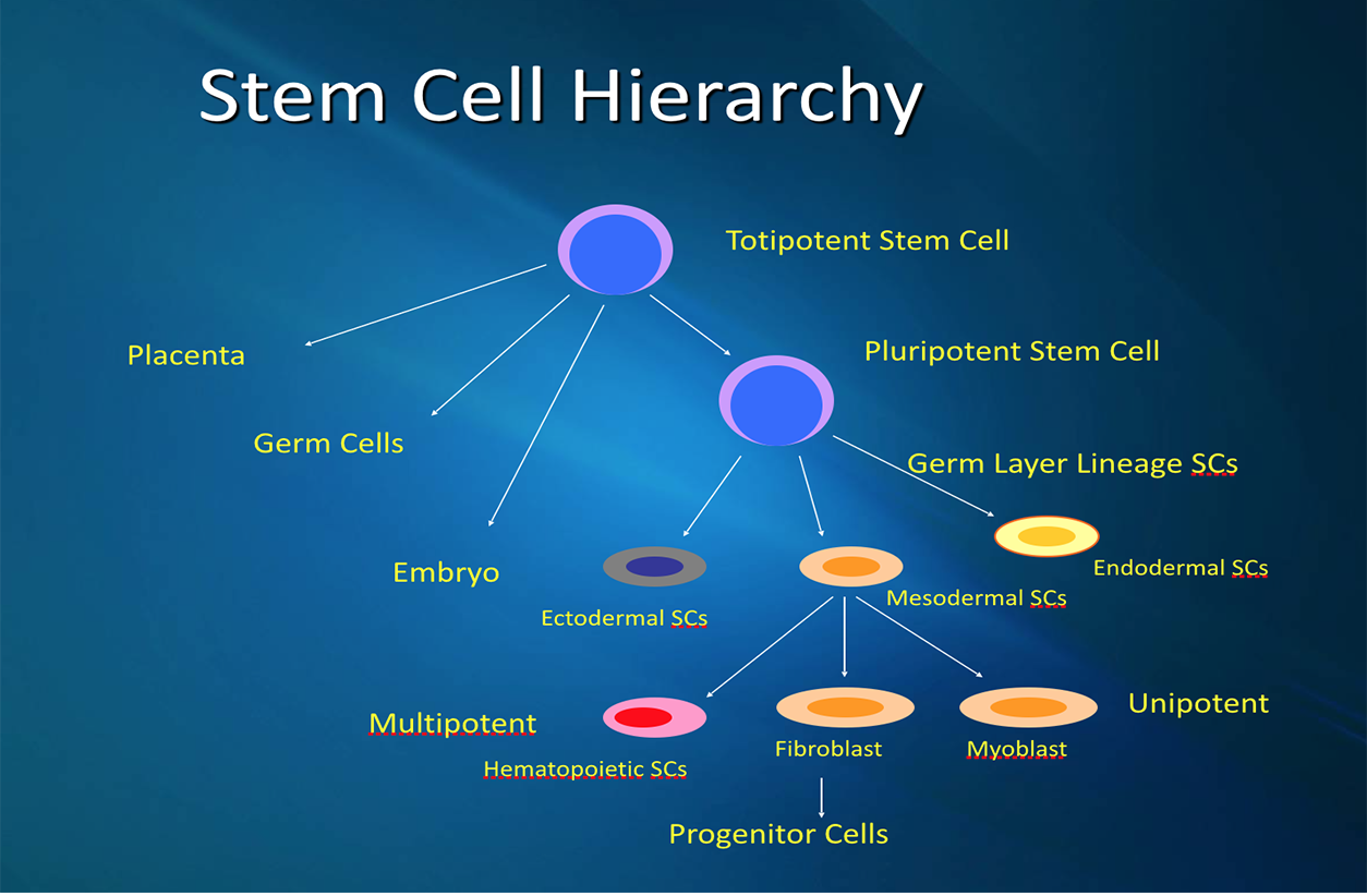 Stem Cell Treatment and Overview