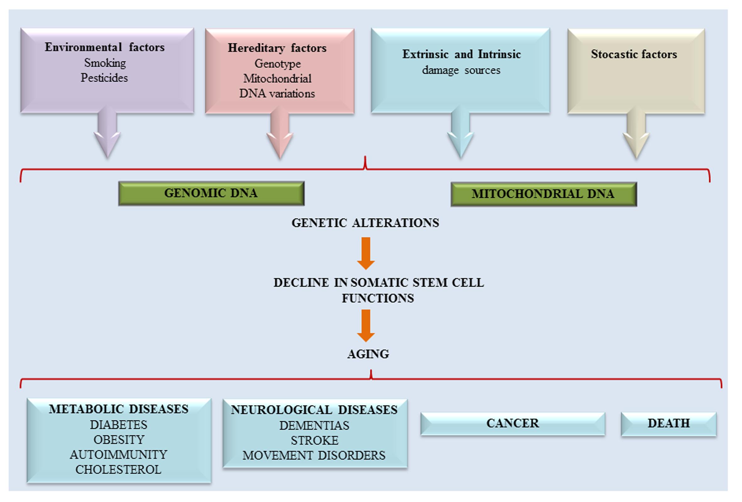 Epigenetic Alterations