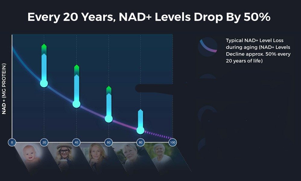 Every 20 Years, NAD+ Levels Drop By 50%