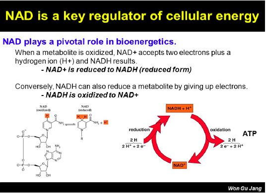 NAD is a key regulator of cellular energy
